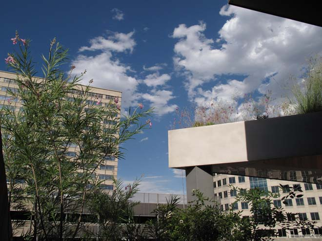 Museum of Contemporary Art in Denver with Chilopsis linearis. Photo: Lisa Lee Benjamin