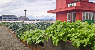 The community rooftop garden atop Stackhouse Apartments. Photo: Hilary Dahl