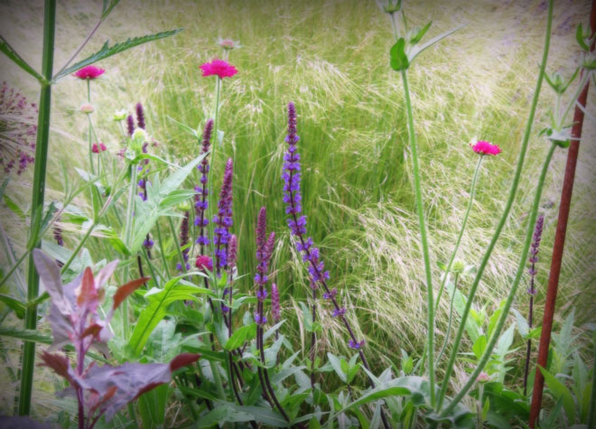 A pollinator-friendly matrix of blossoms and grasses. Photo: Lorene Edwards Forkner