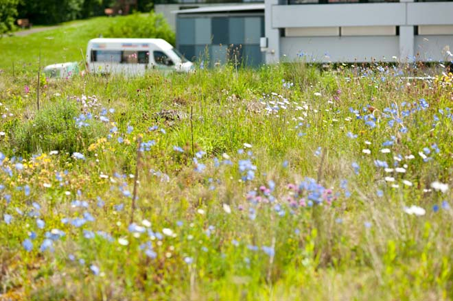 Author's green roof test site in Kreuzlingen, Switzerland. Photo: Rafael Schneider