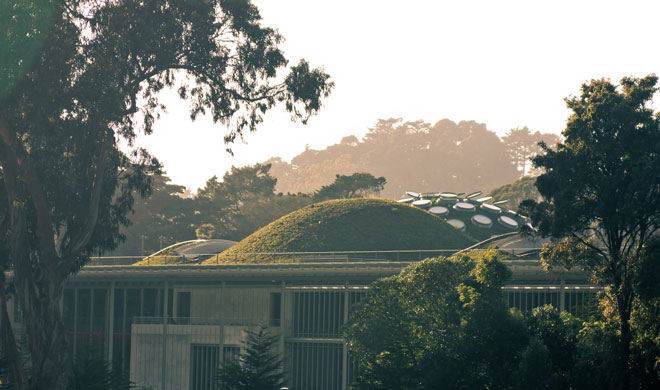 The living roof at  California Academy of Sciences in San Francisco. Photo: Courtesy of DC Bryan and Rana Creek Design