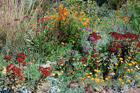 September in the chaparral garden. Photo: courtesy of Northwest Garden Nursery