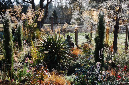The chaparral garden in late October. Photo: courtesy of Northwest Garden Nursery