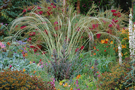 Stipa barbata, Callistemon pallida 'Eleanor', Verbascum chaixi, Eryngium maritimum, Euphorbia 'Blackbird' at the end of June. Photo: courtesy of Northwest Garden Nursery