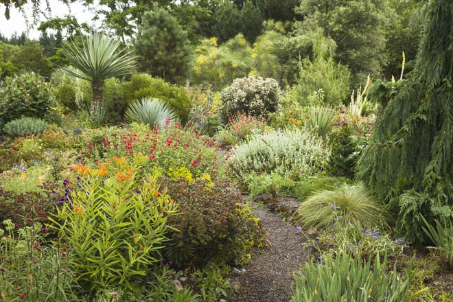 Asclepias tuberosa, Salvia microphylla 'Hot Lips', Yucca ×schottii (tall), and Yucca rostrata (short) furnish the dry garden with hot colors and spiky textures. Photo: Mark Turner