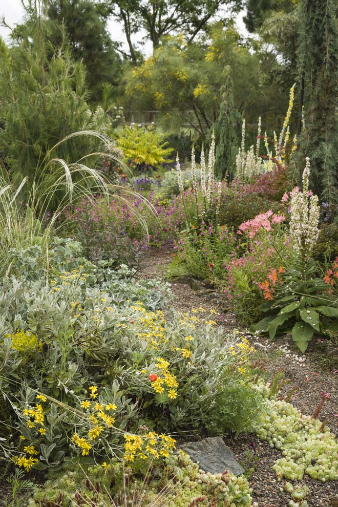 Icy white Verbascum chaixii and pink Alstroemeria ligtu hybrids cool down the mostly warm palette. Photo: Mark Turner