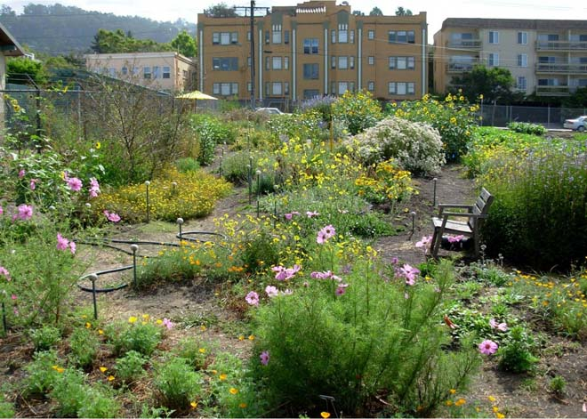 Summer in bloom at the UCB Bee Evaluation Garden. photo; courtesy of UCB Urban Bee Lab