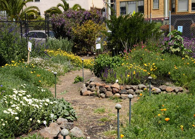 A section of the UCB Bee Evaluation Garden planted with nonnative plants. Photo: courtesy of UCB Urban Bee Lab