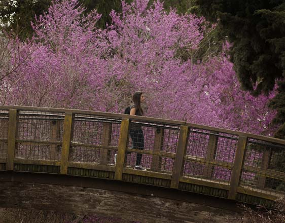 Photo: courtesy of UC Davis Arboretum
