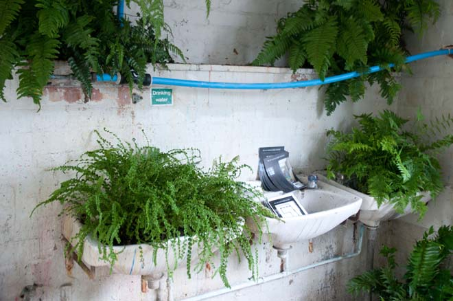 Fernery detail, WC@Vanguard Court, Chelsea Fringe, 2013.  Photo: courtesy Anna Rose Hughes