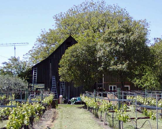 The original 1910 barn framed by grapevines.  