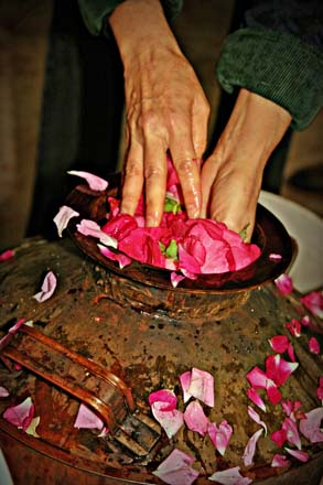 Rose petals are readied for the steam distillation process.  Photos: Mikala Kennan