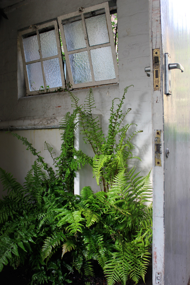 Fernery detail, WC @Vanguard Court, Chelsea Fringe 2013. Photo: courtesy of Anna Rose Hughes