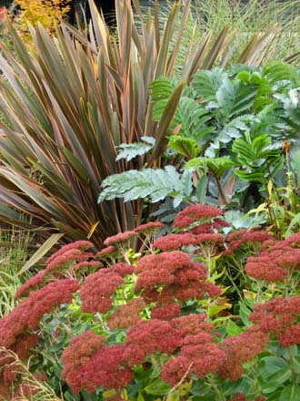 This foliage-driven combination of Sedum 'Autumn Joy', Melianthus major and Phormium looks good all season, but really shines when the sedum flowers take on the rich red tones typical of their fall coloring.  Garden design and photo: Darcy Daniels, Bloomtown Gardens