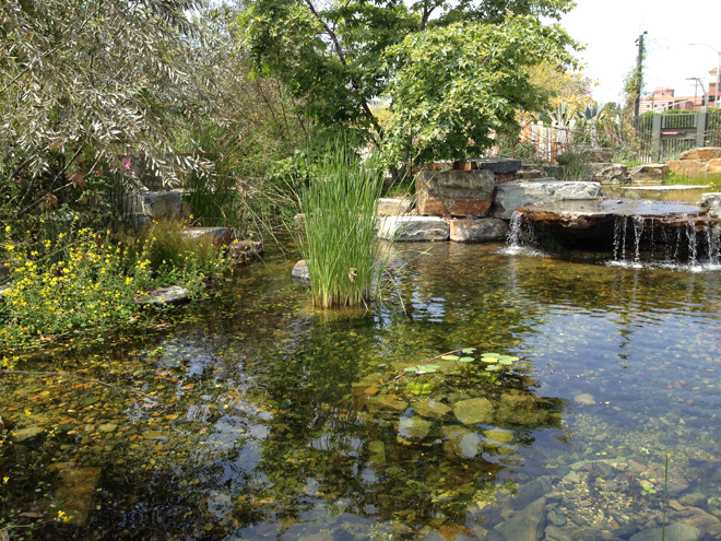 The large, naturalistic pond at Nature Garden teems with wildlife. Photo: Carol Bornstein