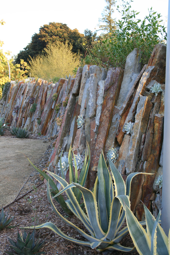 Cracks and crevices between stones in the undulating Living Wall provide planting pockets for succulents and habitat for spiders, snails, and insects.  Photo: Carol Bornstein