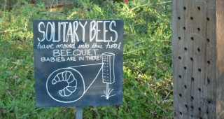 Signage points to solitary bees nesting in a bee hotel. Photo: Carol Bornstein