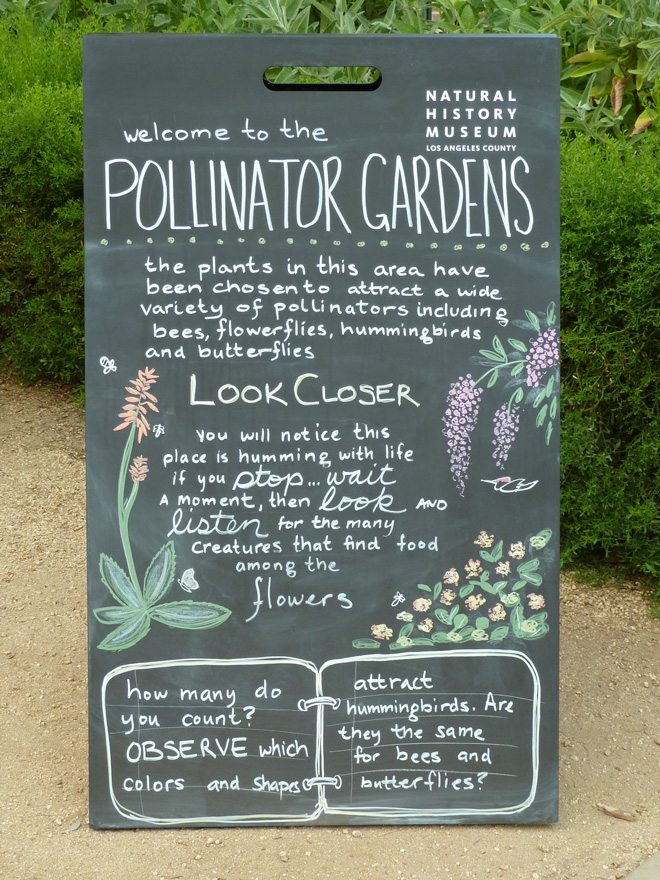 Informative and engaging signs throughout the Garden prompt visitors to stop, look, and listen to what's going on around them. Photo: Carol Bornstein