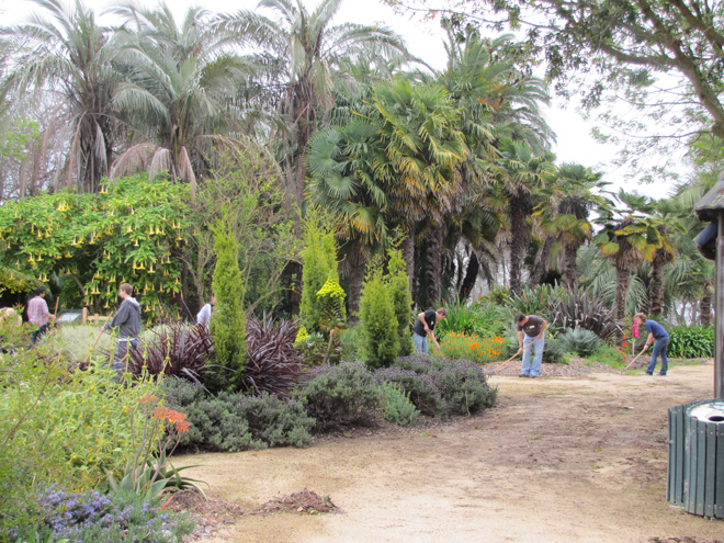 A group of volunteers tidies the Mediterranean Garden and Palmetum.  Photo: Bruce Cobbledick