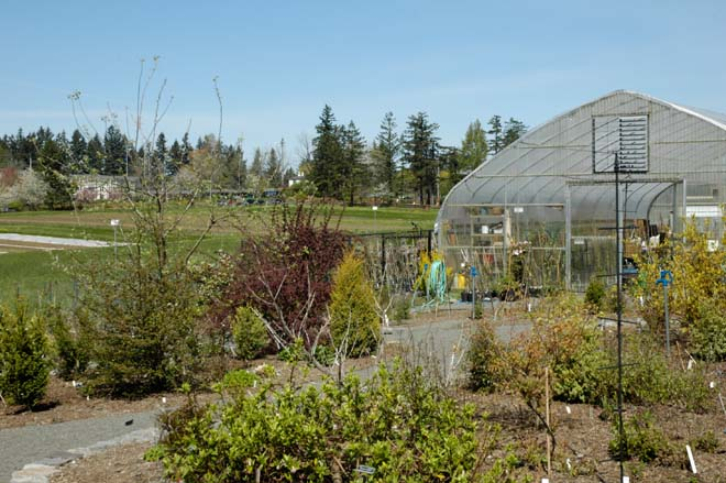 The Bob and Carol Gutmann Greenhouse was constructed for Friends of the Rogerson Clematis Collection in the autumn of 2005. Photo: courtesy of the Rogerson Clematis Collection