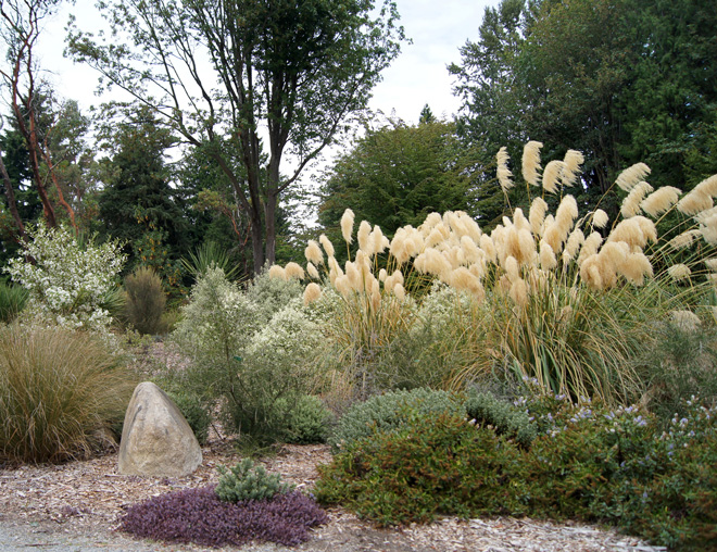 Textural plantings include Pittosporum tenuifolium 'Marjorie Channon', Cortaderia richardii, and Hebe.  Photo: courtesy of Berger Partnership