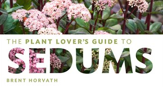 sedum-bookfeature