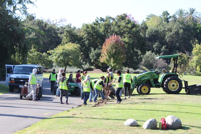 October 15, 2013: sod removal day. Photo: courtesy of Los Angeles County Arboretum