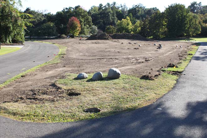 October 16, 2013: the now-cleared site with removed sod piled in reserve. Photo: courtesy of Los Angeles County Arboretum