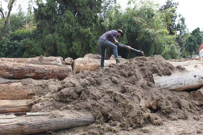 ...and by hand, horticulturist Matt Geldin. Photos: courtesy of Los Angeles County Arboretum