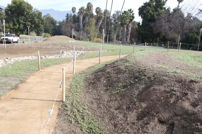 January 28, 2014: Wildflower seedlings begin to germinate. Photo: courtesy of Los Angeles County Arboretum