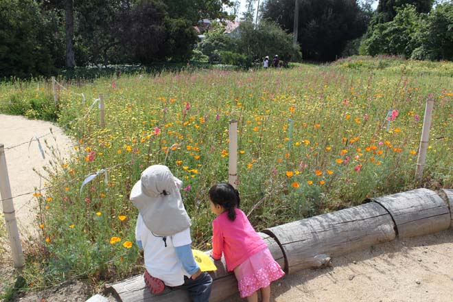 The showy display captivated even the youngest Arboretum visitor. Photo: courtesy of Los Angeles County Arboretum