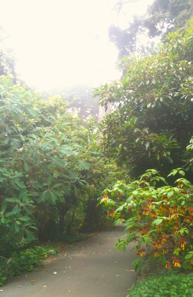 A path at SFBG invites exploration of the cloud forest. Photo: Brendan Lange