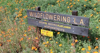 wildflowering-feature