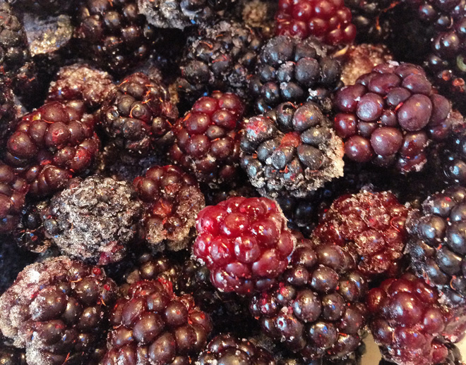 I had to poach our frozen stash of blackberries for my project causing my husband to fear for his pie supply. Photo: Lorene Edwards Forkner