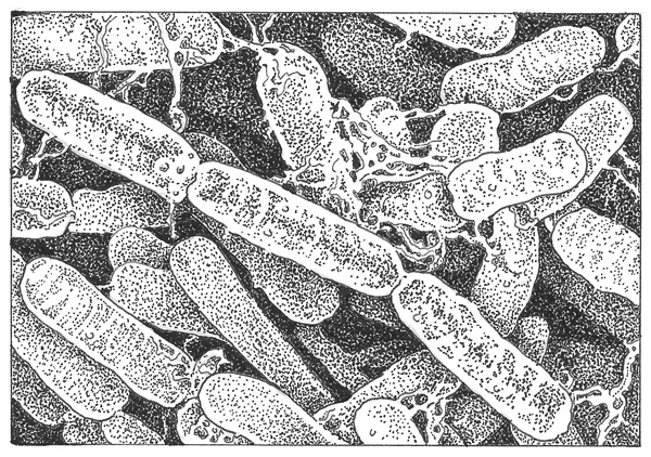 Bacillus thuringiensis colony. Illustration: Craig Latker
