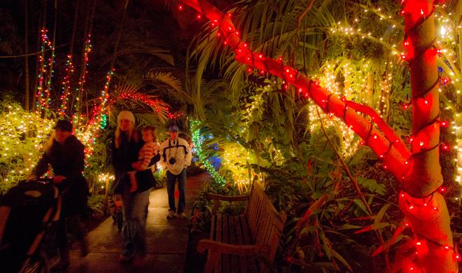Garden of Lights at San Diego Botanical Garden. Photo: Rachel Cobb