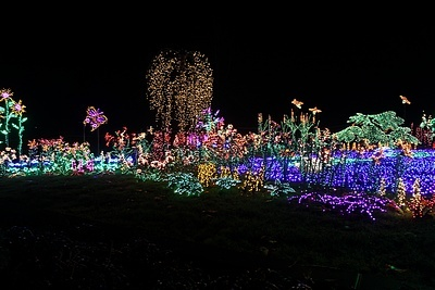 Pacific Horticulture Society Lighting the Night