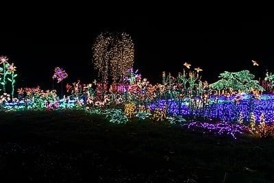 Garden d'Lights at Bellevue Botanical Garden.