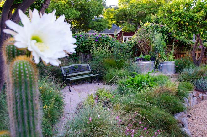 A residential garden planted with meadow habitat plants, a combination of grasses, veggies, herbs, and butterfly-attracting flowers. Photo: courtesy of Mariposa Gardening & Design