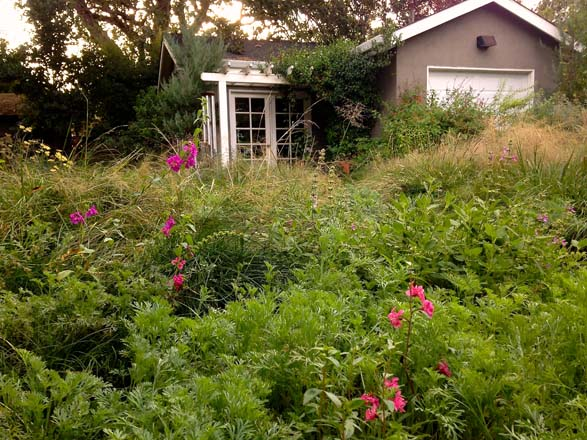 This front yard urban meadowscape is a haven for butterflies, birds, and other pollinators. Photo: Teresa Renee Norris