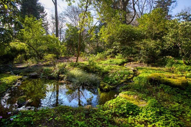 One of two man-made ponds on the Dunn Garden property, shown here in spring.  Photo: Mike Siegel