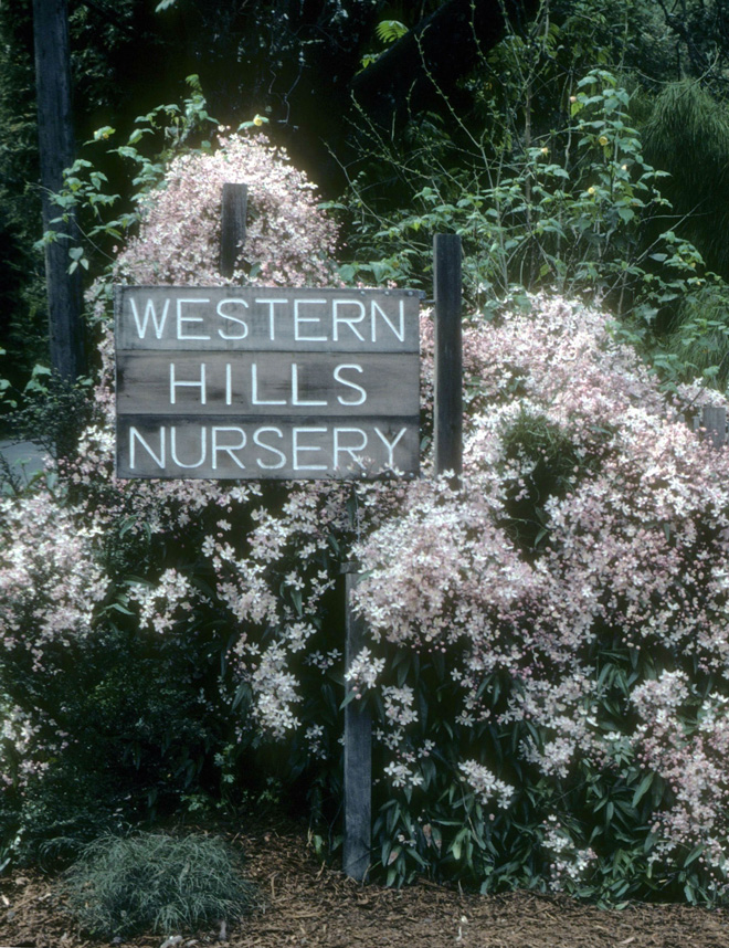 Former sign at the nursery's entrance on Coleman Valley Road.  Photo: Western Hills Collection