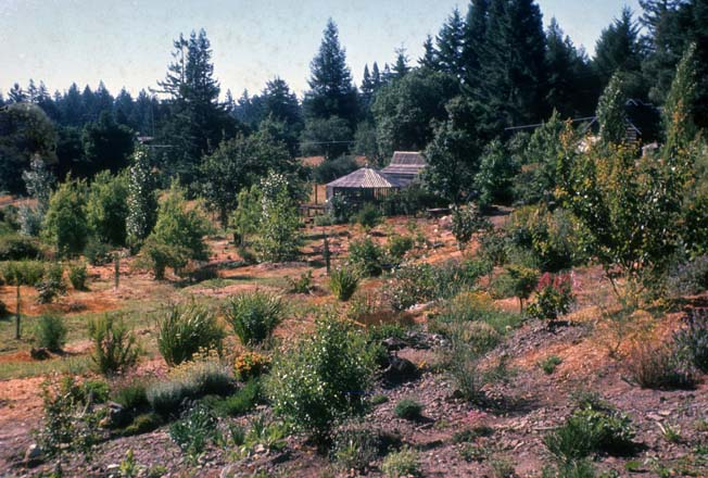 The newly planted landscape at Western Hills, circa 1960-61.  Photo: Lester Hawkins, Western Hills Collection