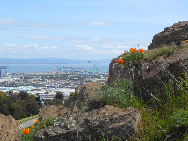 A view toward the East Bay from the top o Bernal Hill. Photo: Veronica Voss-Macomber