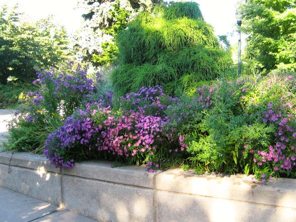 Graduated, raised beds allow easy access to plantings. Photo: Patty Cassidy