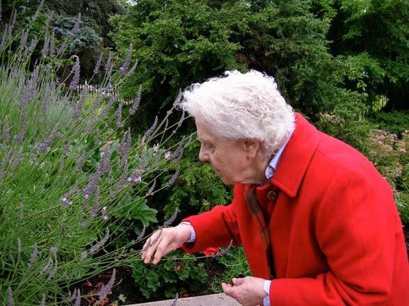 An elder visitor to the Portland Memory Garden enjoys lavender. Photo: Patty Cassidy