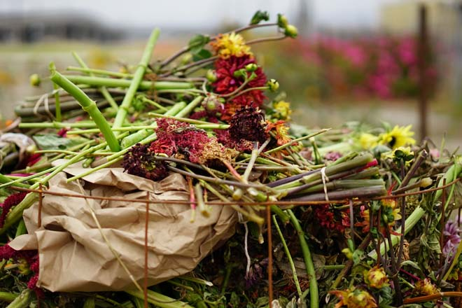 WOW Farm Flowers uses sustainable growing practices with few inputs other than compost and care.  Photo: Timi Devlin