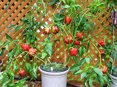 masters of urban horticulture handbook