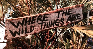 wild-things feature