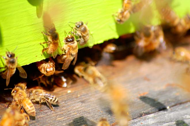 "Warm summer evenings and a couple of lawn chairs provide good ""Bee TV"" watching. Photo: Dan Corum"
